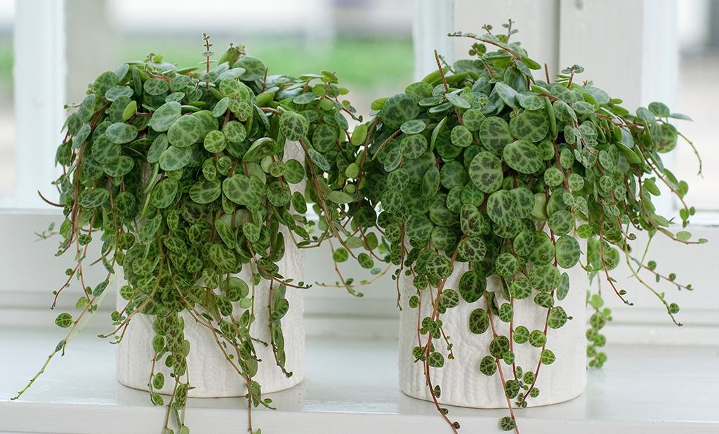 Plants you need inside your house - UDesign